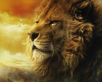 Power : The Nature of Lion ?